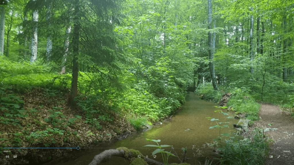 Ankommen im Online-Seminar: virtuelles Waldbaden